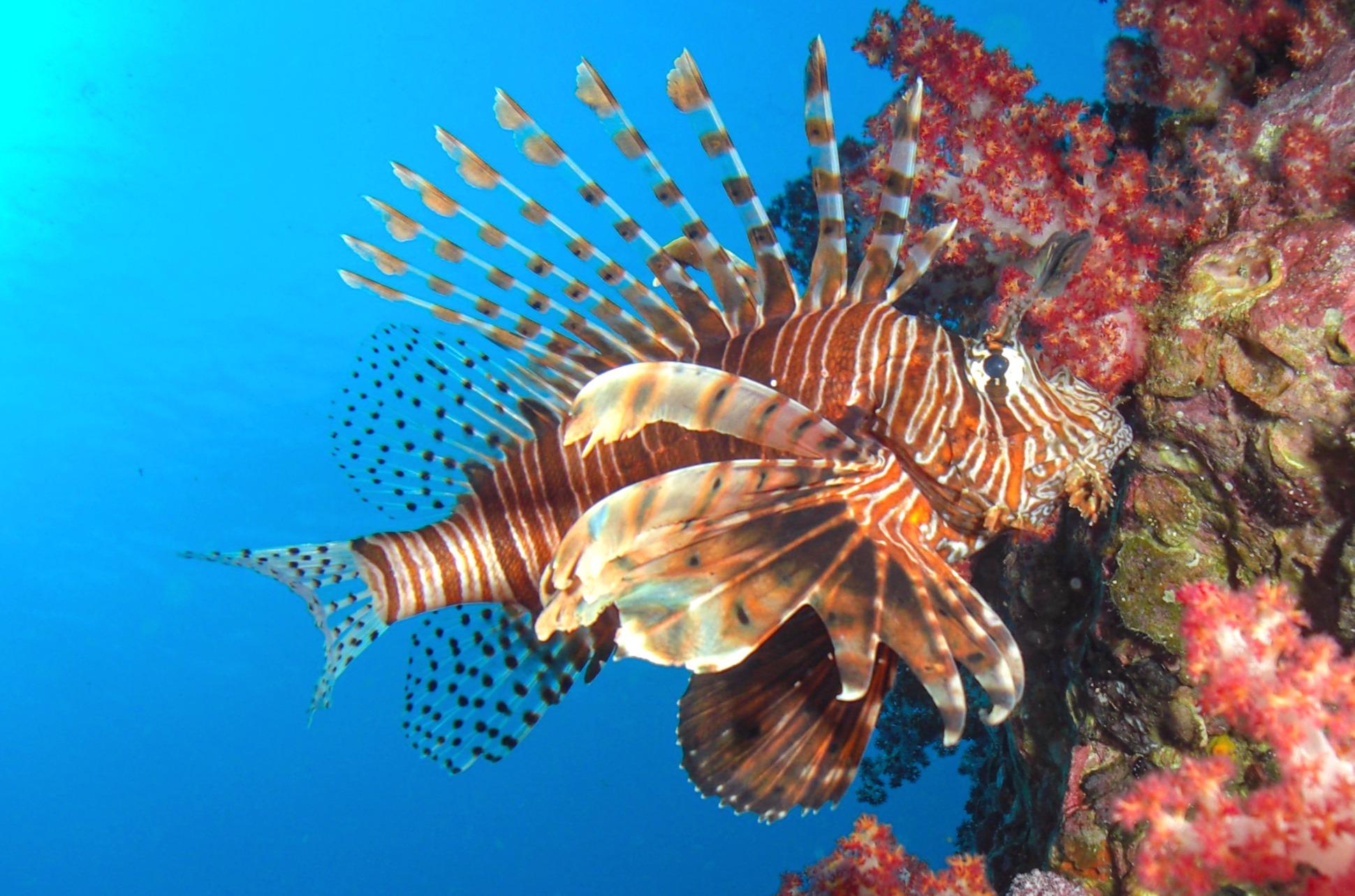 Snorkel and dive Menjangan