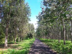 West Bali scenic road-10