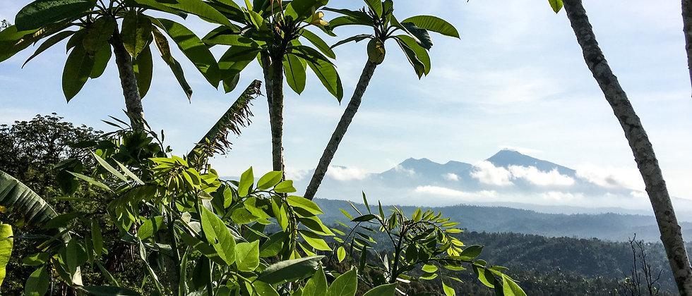 Scenic road across Bali