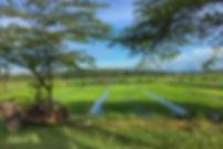 explore secret bali hidden bali west bali negara medewi rice paddies rice fields nature west bali national park