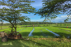 Road near Negara