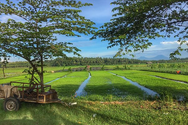 Travel guide to Negara