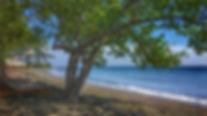 luxury retreat hotel secret bali hidden bali west bali diving surfing yoga