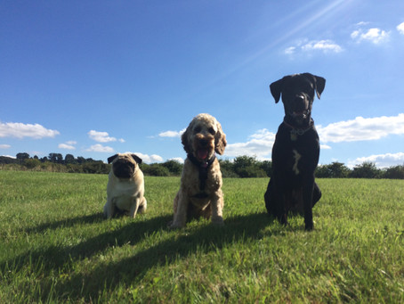 The Importance of Dog Socialisation