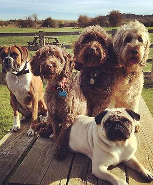 Dog Group on table.jpg