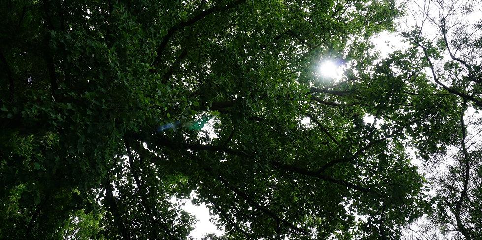 Bild_Bäume_Zahlbacher_Höfe.jpg