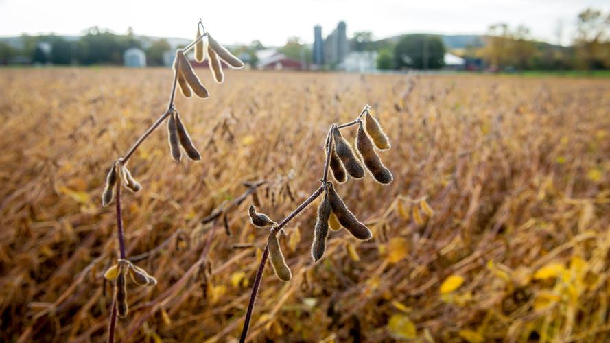 soybeans-31_wide-6c99decd429faa2462c795f