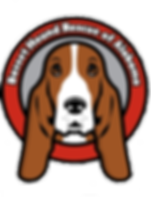 Basset Hound Rescue of Alabama