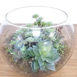 terranium com mix verdes e suculentas