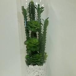terranium com cactus