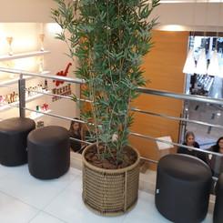 Werner_barra_shopping_árvore_cachepo_sit