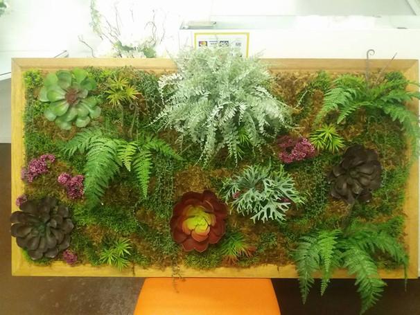 quadro jardim vertical, suculentas e samambaias e musgos