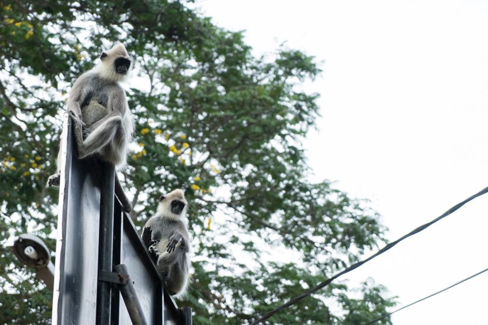 Tissamaharama._Sri_Lanka._©Lisa_Boniface-30
