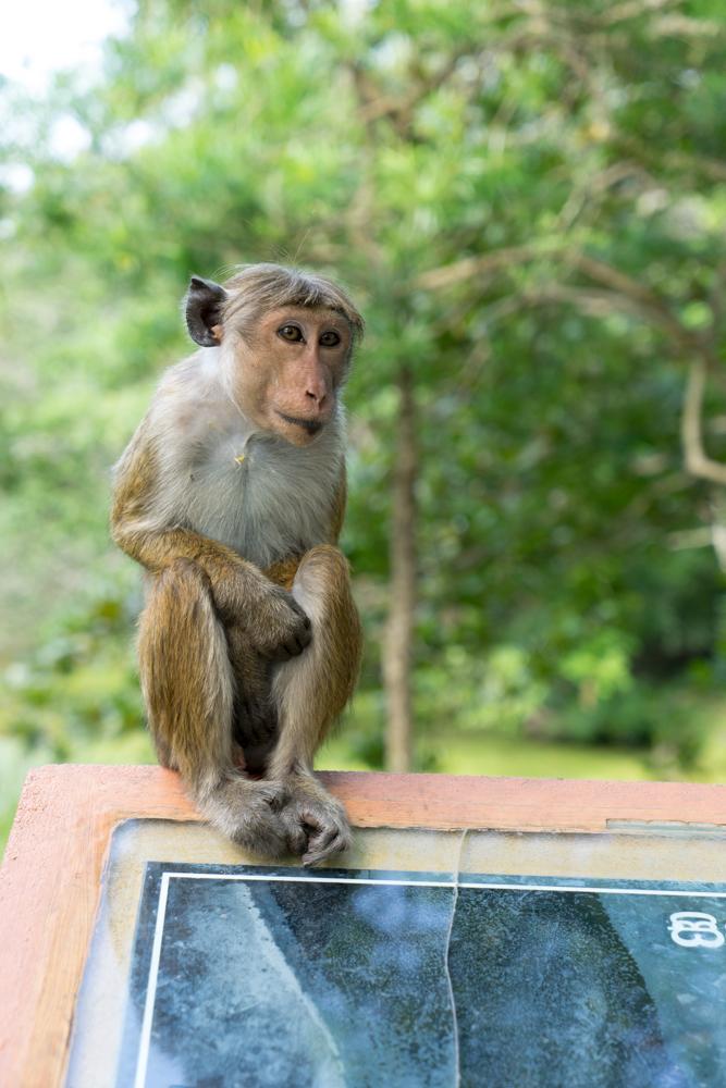 Anuradhapura._Sri_Lanka._©Lisa_Boniface-23