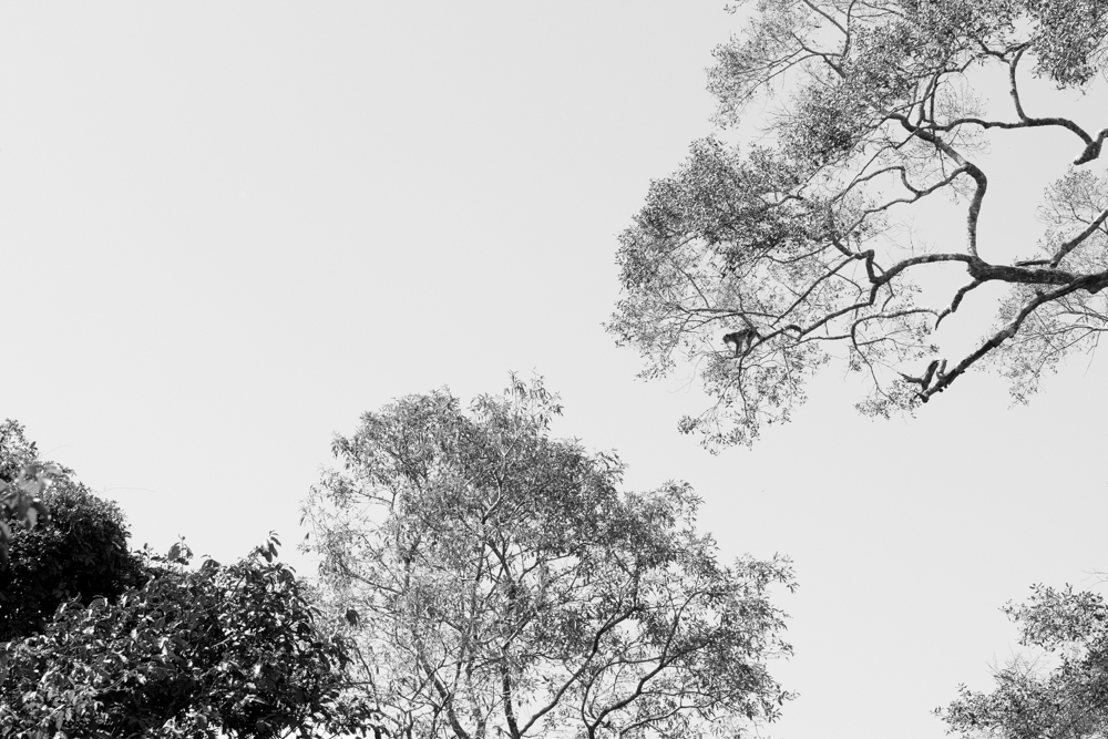 Sigiriya._Sri_Lanka._©Lisa_Boniface-12