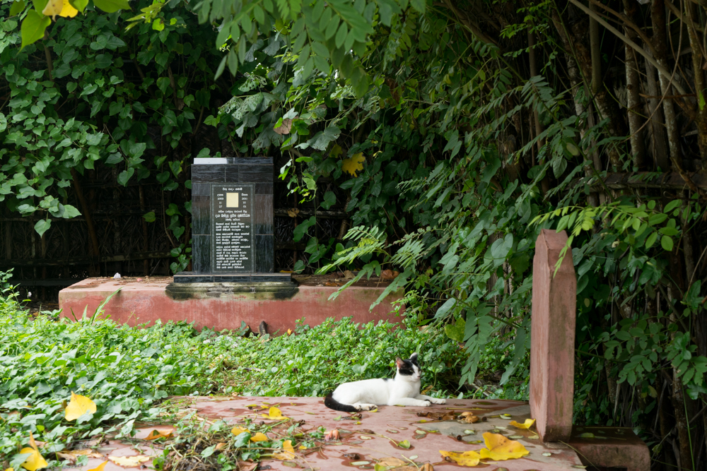 Matara._Sri_Lanka._©Lisa_Boniface-12