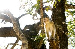 Sigiriya._Sri_Lanka._©Lisa_Boniface-11