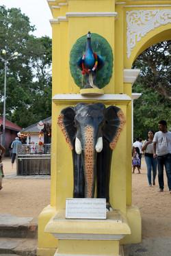 Tissamaharama._Sri_Lanka._©Lisa_Boniface-44