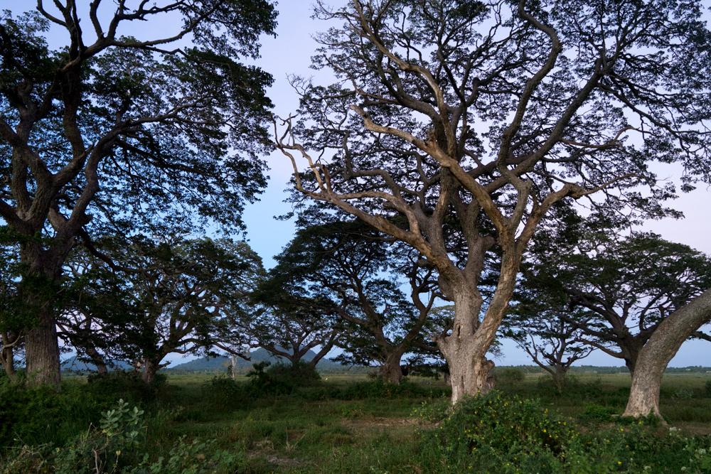 Tissamaharama._Sri_Lanka._©Lisa_Boniface-8