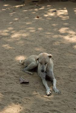 Trincolmalée._Sri_Lanka._©Lisa_Boniface-2