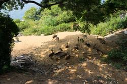Trincolmalée._Sri_Lanka._©Lisa_Boniface-7