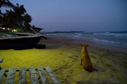 Trincolmalée._Sri_Lanka._©Lisa_Boniface-1