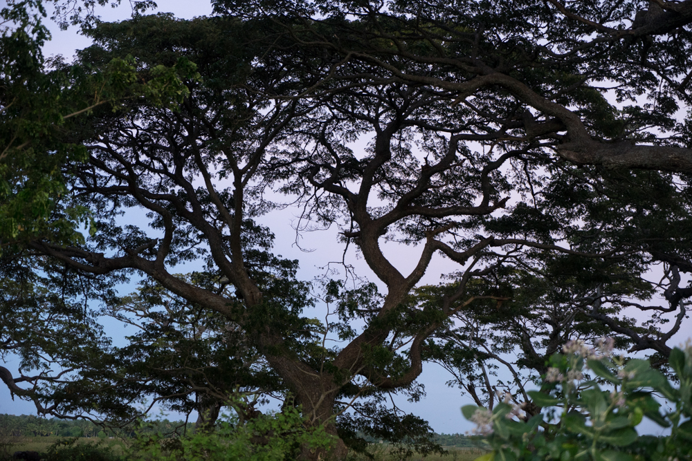 Tissamaharama._Sri_Lanka._©Lisa_Boniface-7