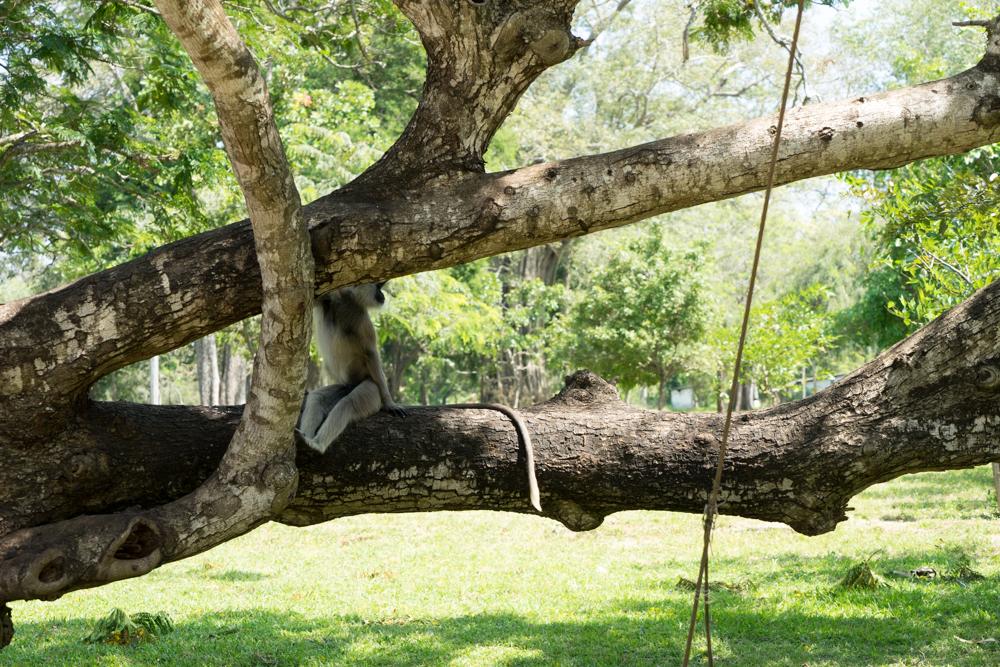 Anuradhapura._Sri_Lanka._©Lisa_Boniface-8