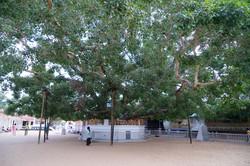 Tissamaharama._Sri_Lanka._©Lisa_Boniface-46