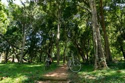 Sigiriya._Sri_Lanka._©Lisa_Boniface-19