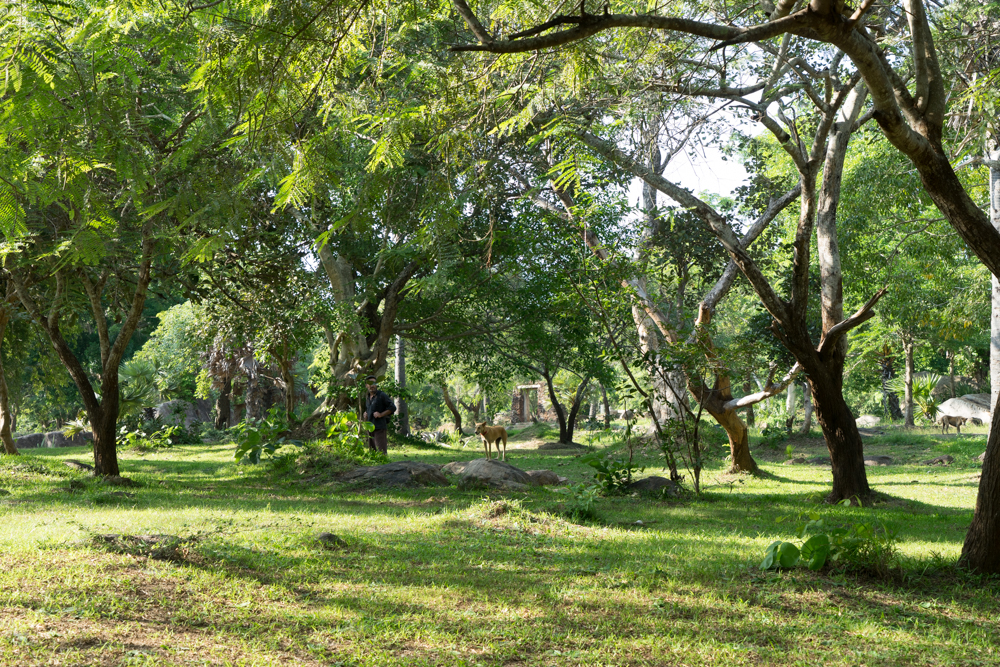 Anuradhapura._Sri_Lanka._©Lisa_Boniface-31