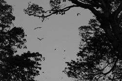 Tissamaharama._Sri_Lanka._©Lisa_Boniface-12