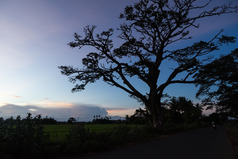 Tissamaharama._Sri_Lanka._©Lisa_Boniface-10
