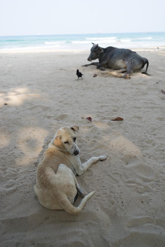 Trincolmalée. Sri Lanka. ©Lisa Boniface-22