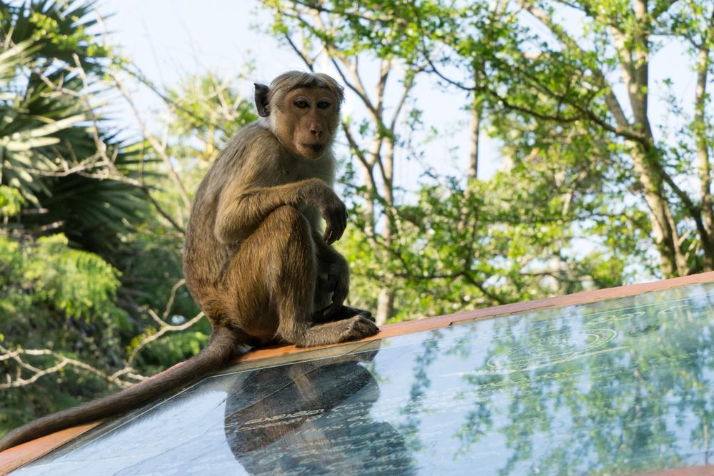 Anuradhapura._Sri_Lanka._©Lisa_Boniface-21