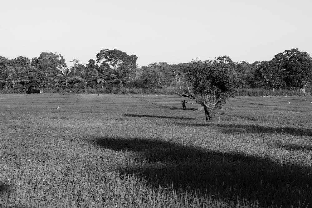 Sigiriya._Sri_Lanka._©Lisa_Boniface-13