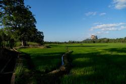 Sigiriya._Sri_Lanka._©Lisa_Boniface-14