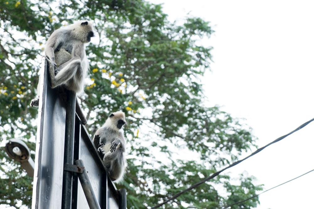 Tissamaharama._Sri_Lanka._©Lisa_Boniface-29