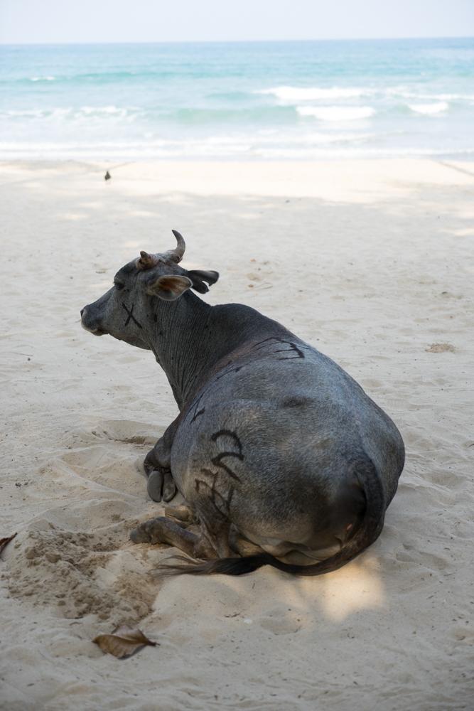 Trincolmalée. Sri Lanka. ©Lisa Boniface-23