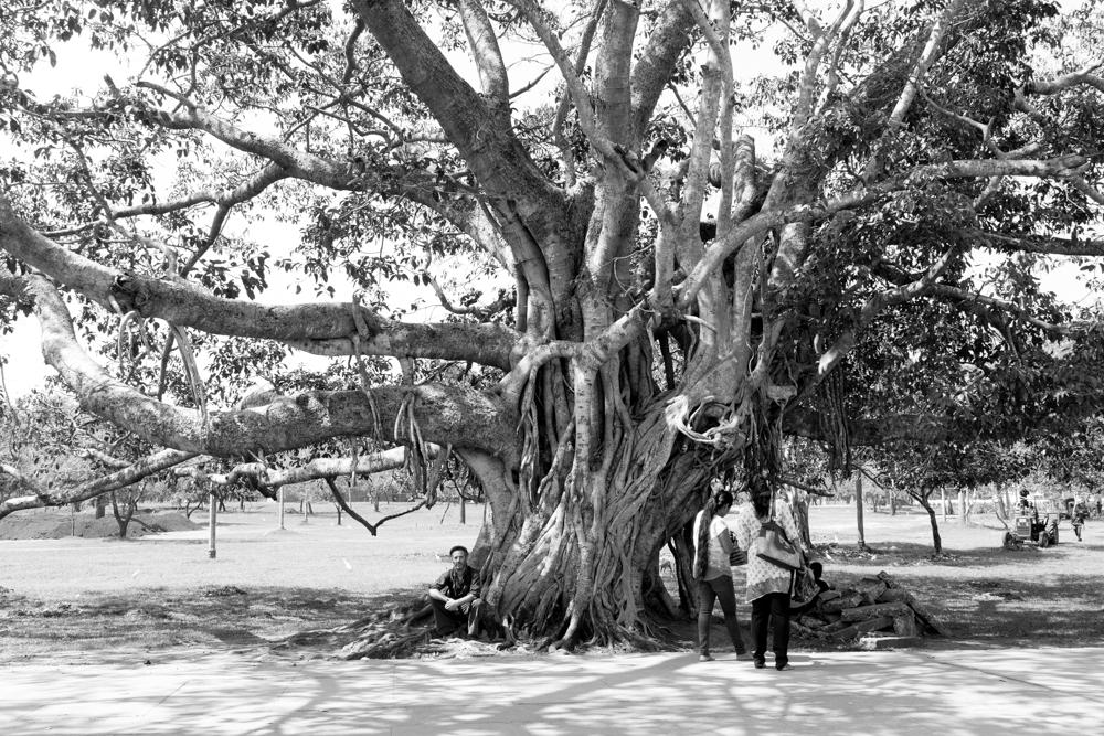 Anuradhapura._Sri_Lanka._©Lisa_Boniface-9