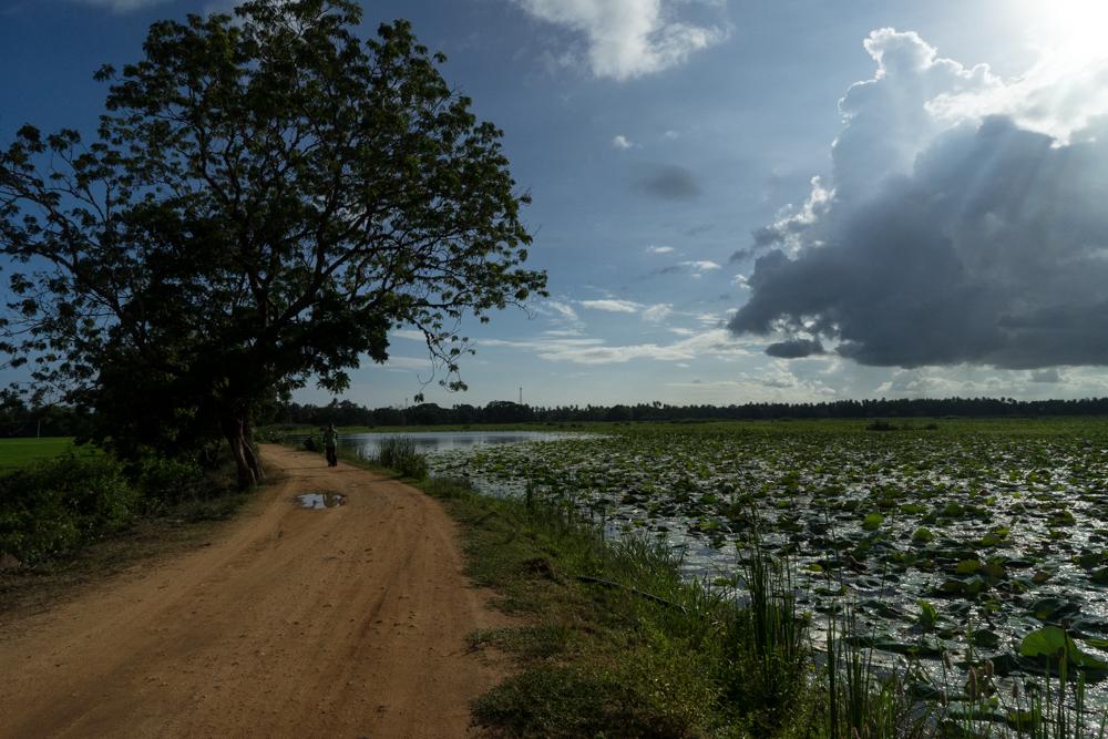 Tissamaharama._Sri_Lanka._©Lisa_Boniface-2