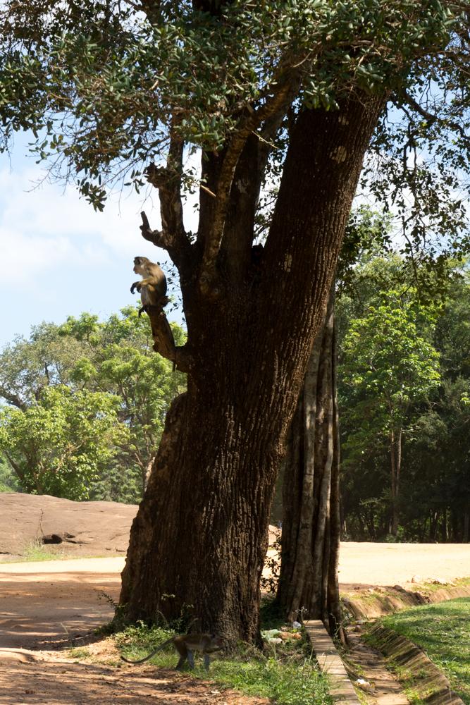 Sigiriya._Sri_Lanka._©Lisa_Boniface-9