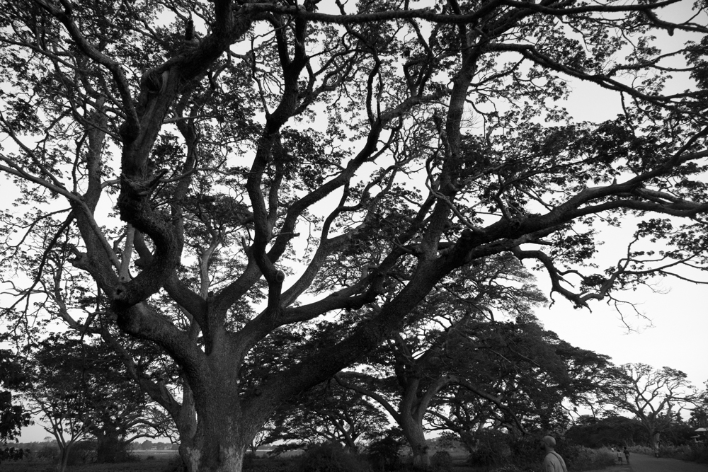 Tissamaharama._Sri_Lanka._©Lisa_Boniface-6