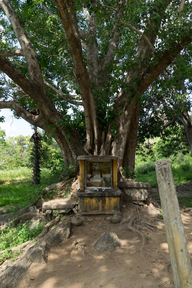 Sigiriya._Sri_Lanka._©Lisa_Boniface-22
