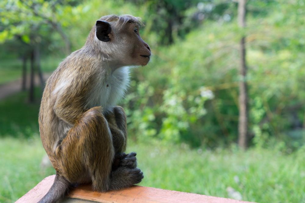Anuradhapura._Sri_Lanka._©Lisa_Boniface-22