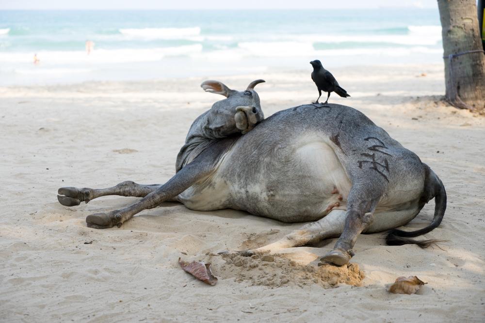 Trincolmalée. Sri Lanka. ©Lisa Boniface-21