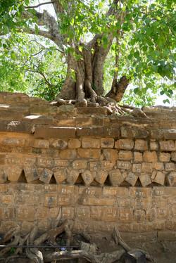 Anuradhapura._Sri_Lanka._©Lisa_Boniface-6
