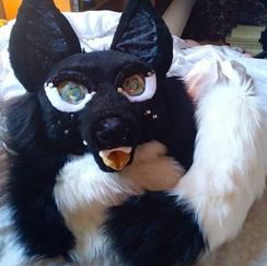 Zenon the Magic Fox