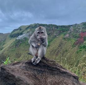 Monkey on a Mountain