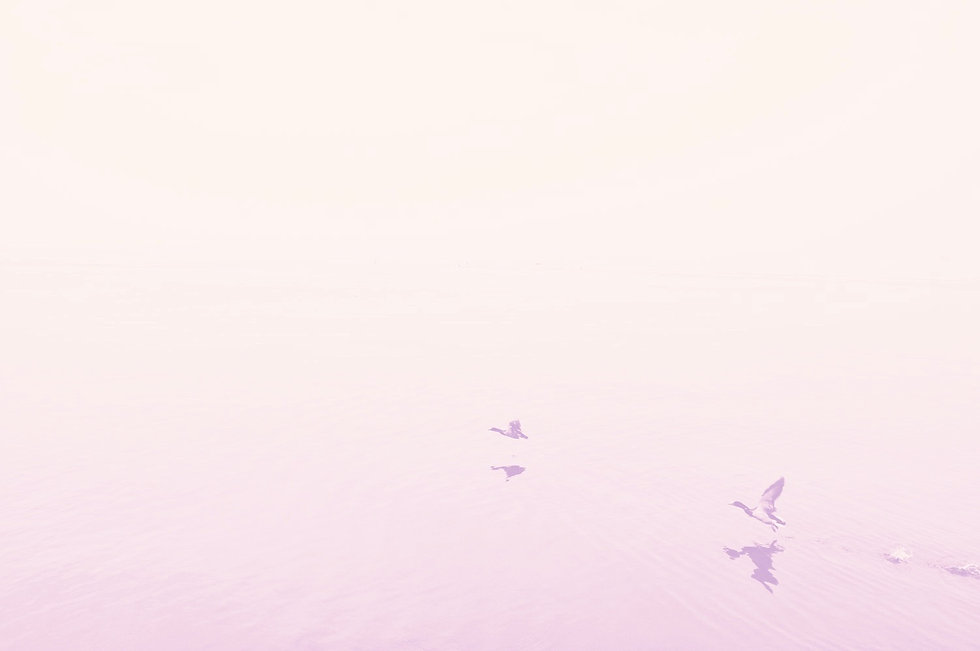 Ducks%252520Over%252520the%252520Lake_edited_edited_edited.jpg